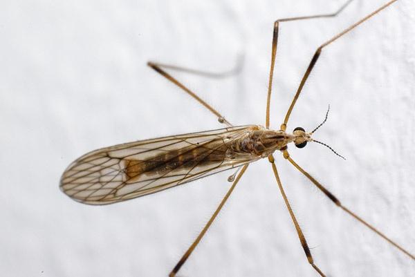 crane fly ecologistics. Black Bedroom Furniture Sets. Home Design Ideas