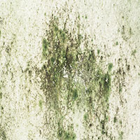 mould_concrete