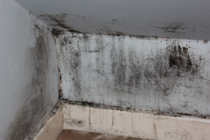 mould-wall