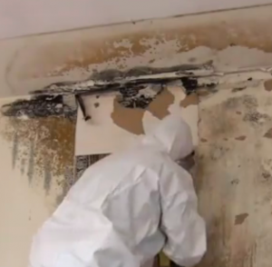 Man removing mould
