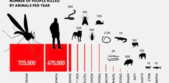 graphic of animals